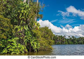 rzeka, w, przedimek określony przed rzeczownikami, peruwiański, amazon dżungla, na, madre, od, dios, peru