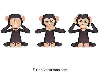 sábio, três, macaco