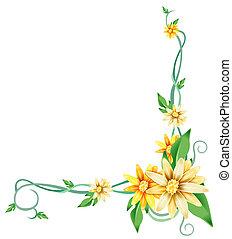 sárga, százszorszép, virág, és, szőlőtőke