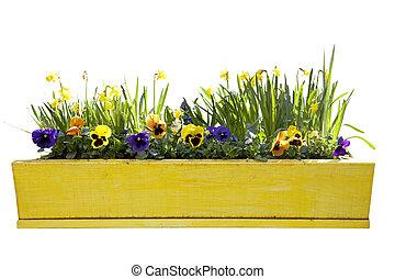 sárga, virágcserép, noha, nárciszok