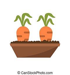 sárgarépa, kert, ágy, sárgarépa, kép