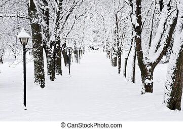 sáv, alatt, tél, liget