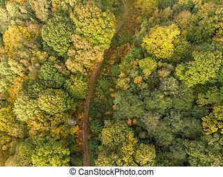 sáv, antenna, ország, ősz erdő, kilátás