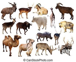 sätta, av, däggdjur, djur, över, vit fond