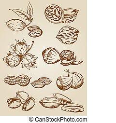 sätta, av, olika, nötter