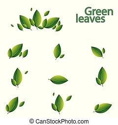 sätta, bladen, illustration, bakgrund., vektor, gröna vita