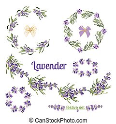 sätta, card., festlig, lavendel, hälsning, elementara, inramar, blomningen, botanisk, illustration.