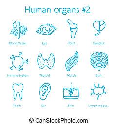 sätta, ikonen, orangs, vektor, mänsklig, kontur