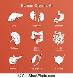 sätta, ikonen, papper, mänsklig, organs, inre