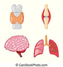 sätta, illustration., organ, medicinsk, symbol., ...