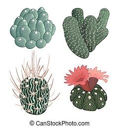 sätta, kaktuser, illustration, hand, vektor, oavgjord