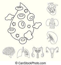 sätta, organ, medicinsk, web., illustration, anatomi, vektor...