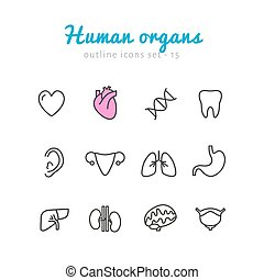sätta, organs, mänsklig, ikonen