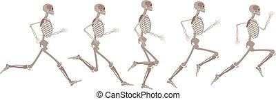 sätta, skelett, rörelse, vektor, mänsklig, runnning
