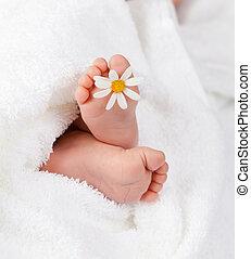 säugling, wenig, gänseblumen, fuß, weißes, reizend