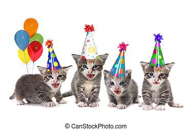 sång, kattungar, födelsedag, bakgrund, vit, sjungande