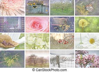 sæsonprægede, collage, billederne, lede, vinhøst