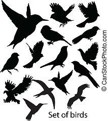 sæt, birds., vektor