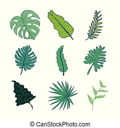 sæt, blade, illustration, hånd, tropisk, adskillige, aktiv, ...