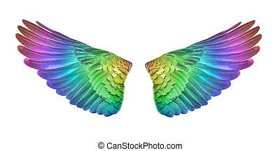 sæt, farverig, isoleret, fugl, hvid, backgorund., vinger