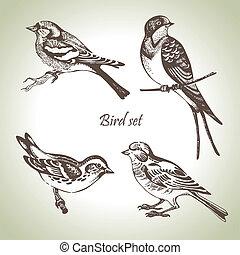 sæt, hand-drawn, fugl, illustration