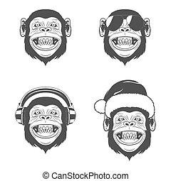 sæt, hoveder, abe