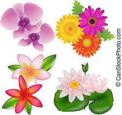sæt, i, blomster