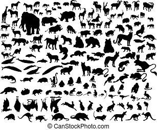 sæt, i, dyr, silhuetter