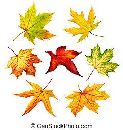 sæt, i, farverig, isoleret, efterår forlader