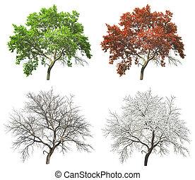sæt, i, fire sæsoner, træ, isoleret, på hvide, baggrund