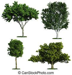 sæt, i, fire, træer, isoleret, imod, pure, hvid