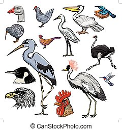 sæt, i, fugle, hos, kolibri, hejre, og, kiwi