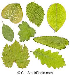 sæt, i, grønnes blad