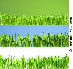 sæt, i, rense, i tiltagende, frisk, græs, på hvide, blå grønne, baggrund