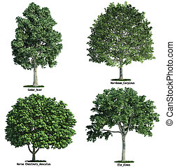 sæt, isoleret, imod, fire, træer, pure, hvid