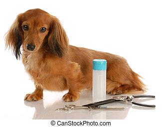 séance, chevelure, -, chien, long, à côté de, miniature, fournitures, soins personnels, teckel