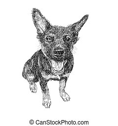 séance, chien, arrière-plan., noir, blanc, dessin
