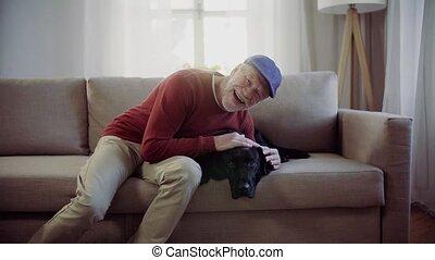 séance, chouchou, sofa, chien, intérieur, personne agee, fun., avoir, maison, homme