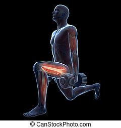 séance entraînement, jambe
