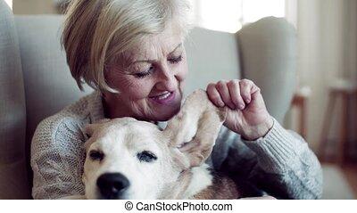 séance femme, chien, relaxing., intérieur, personne agee, maison