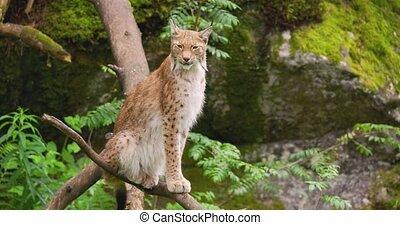 séance, forêt arbre, carnivore, mammifère