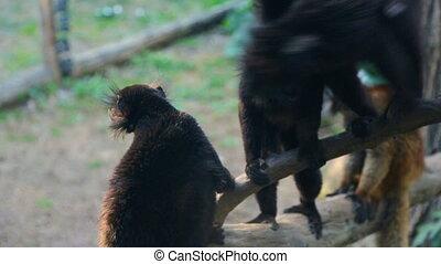 séance, groupe, arbre, baissé, lemurs