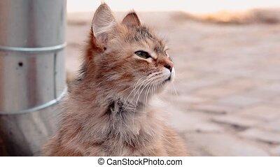 séance, regarde, mignon, ensoleillé, autour de, cour, chat vert, day., maison, pelucheux, yeux