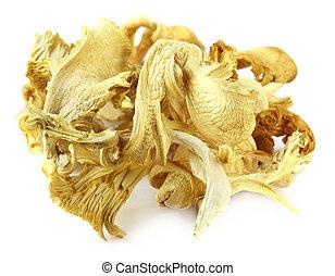 Automne, sécher, détail, champignon. Automne, champignon, sécher, détail, fondé, forêt.