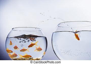 s'échapper, cuvette goldfish, bondé