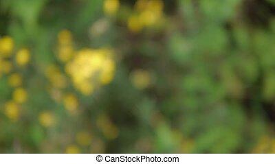 sélectif, fleur, foyer, jaune, closup