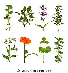 sélection, aromate, fleur, feuille