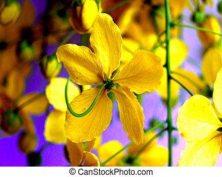 sélection, divers, fleur, coloré, nature