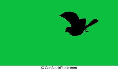 séparé, silhouette, moineau, écran, voler, -, oiseau vert