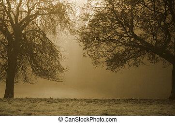 sépia, arbres